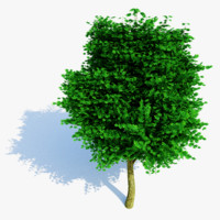3d tree materials leaves model