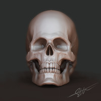 maya human skull