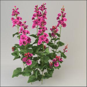malva flower 3d model