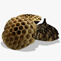 max wasp nest