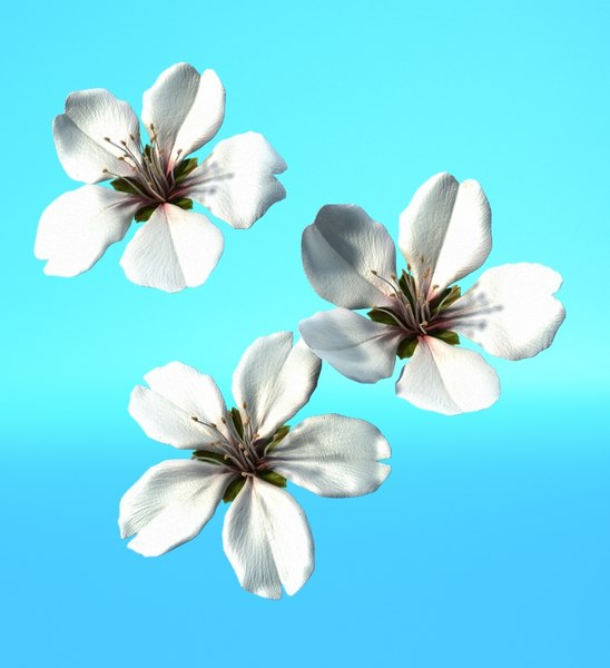 lwo lily