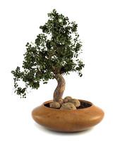 bonsai plant c4d