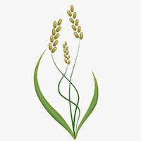 3d model wall barley fg