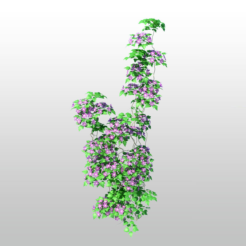 3d clematis tree flower