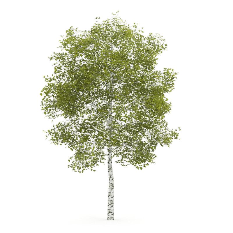tree birch m 3d model