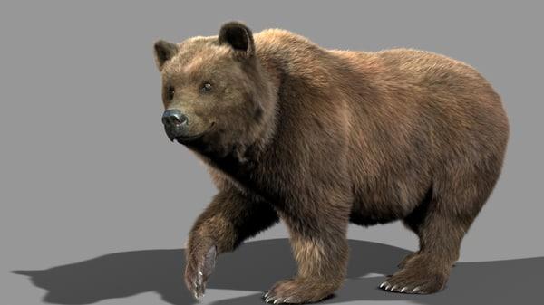 3d bear animation