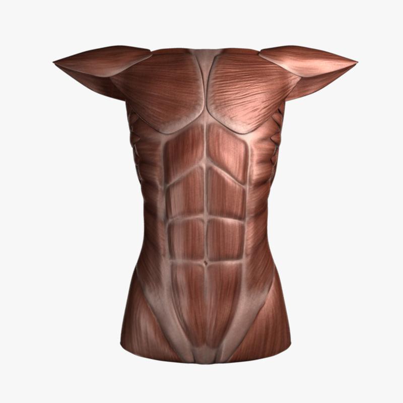 female torso 3d x