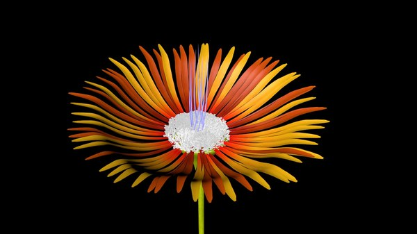 r14 flower xpresso - c4d free