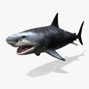 great white shark c4d