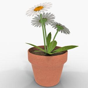 daisy flower plant 3d 3ds