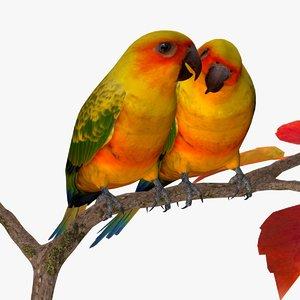 sun parakeets birds ab 3ds