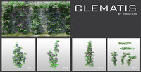 clematis plant tree 3d model