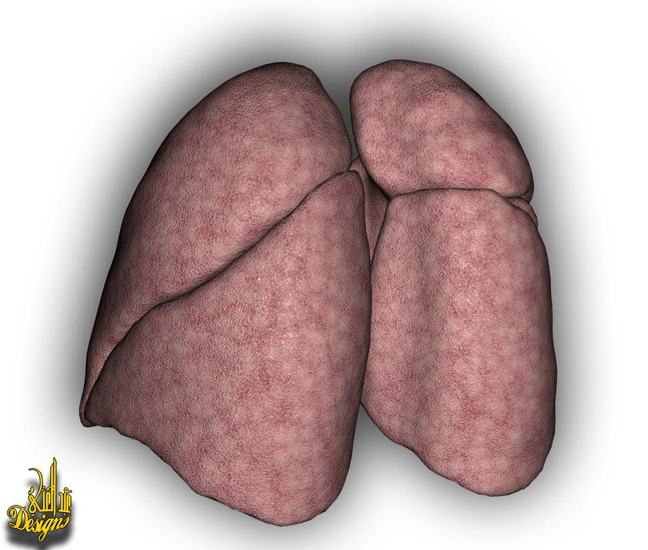 3d model lungs