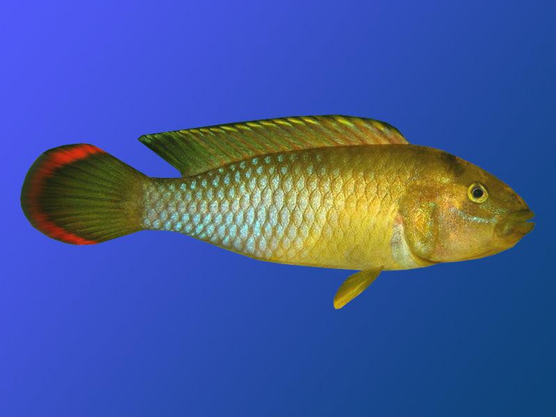 fish ma