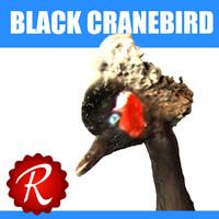 Black Cranebird