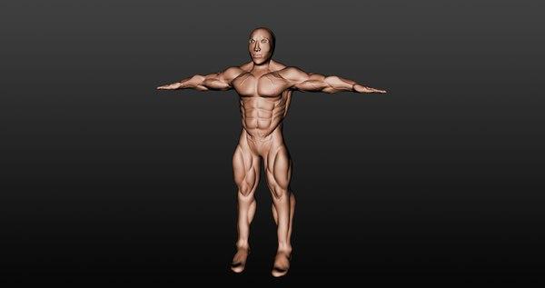 free muscular male 3d model
