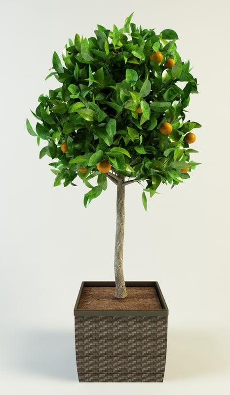 orange tree max