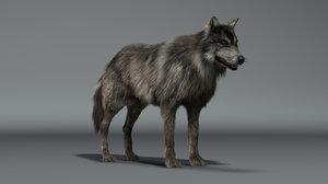 3d wolf fur