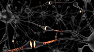 neuron nerve cell 3ds
