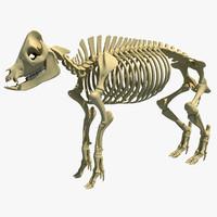 3d model pig skeleton