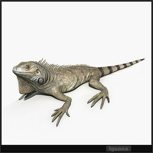 resolution iguana lizards 3d model