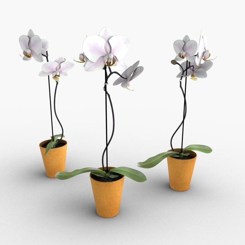 orchid scanline 3d 3ds