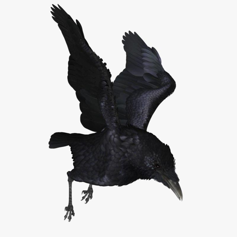 realistic raven 3d ma