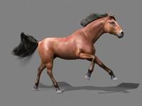 horse mane animation 3d model