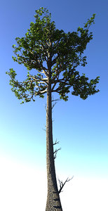 3d model of trees readiness renders