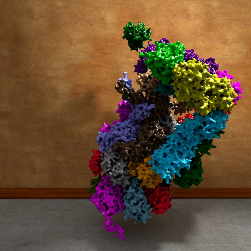 maya 20s proteasome