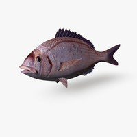 sea bream 3d c4d
