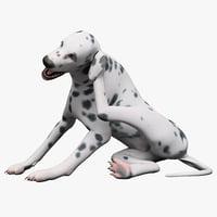 Dalmatian Dog Pose 4