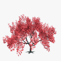 japanese maple 3d model