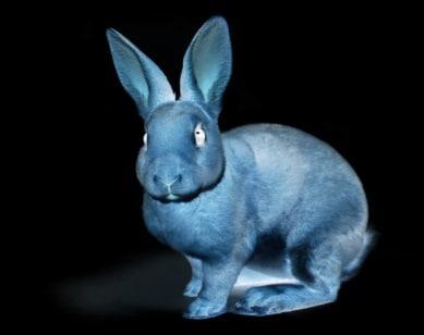 bunny 3d fbx
