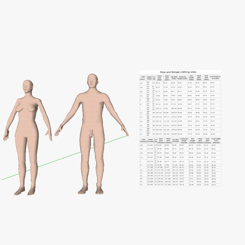 3d model male female homo sapiens