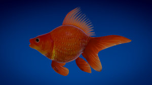 3ds max goldfish fish