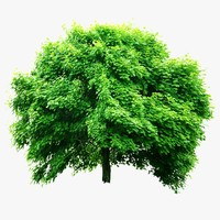 tree realistic 3d 3ds