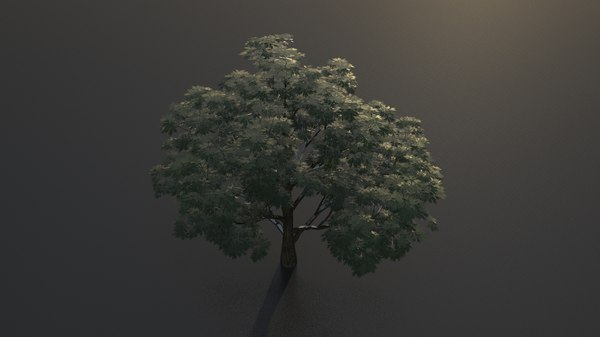 3d obj broadleaf leaf