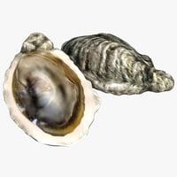 oyster modeled model