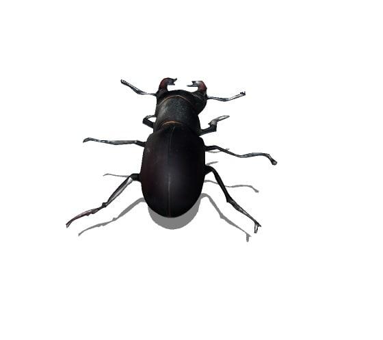 beetle bug 3d model