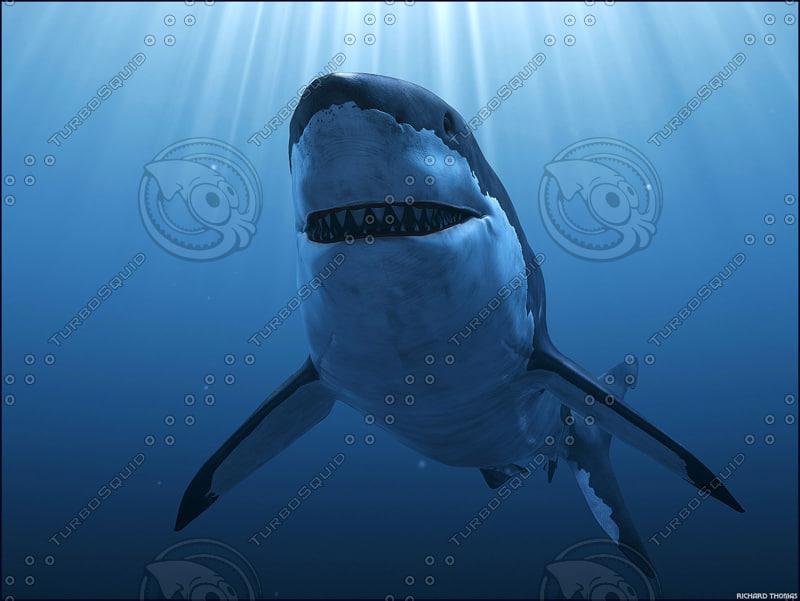 3d great white shark animation