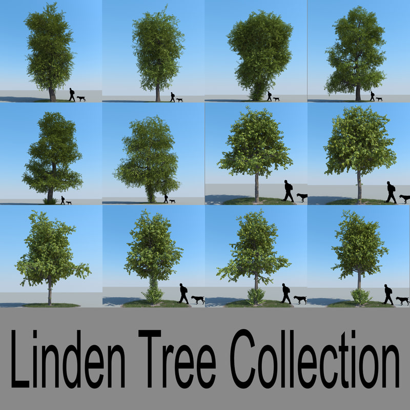 3d realistic linden lime trees