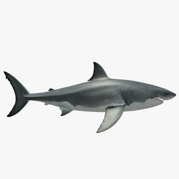 c4d great white shark