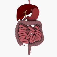 3dsmax digestive