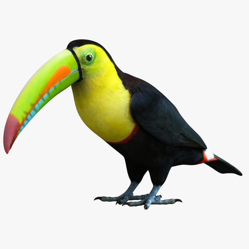 3ds max rainbow billed toucan bird