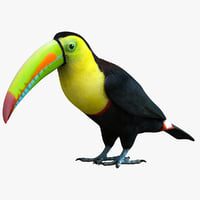 3ds max rainbow billed toucan bird
