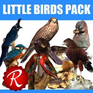 birds 3d max