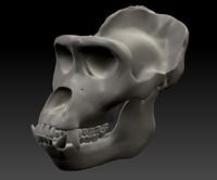 max gorilla skull