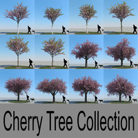 max realistic cherry trees