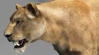 lioness lion cat 3d model